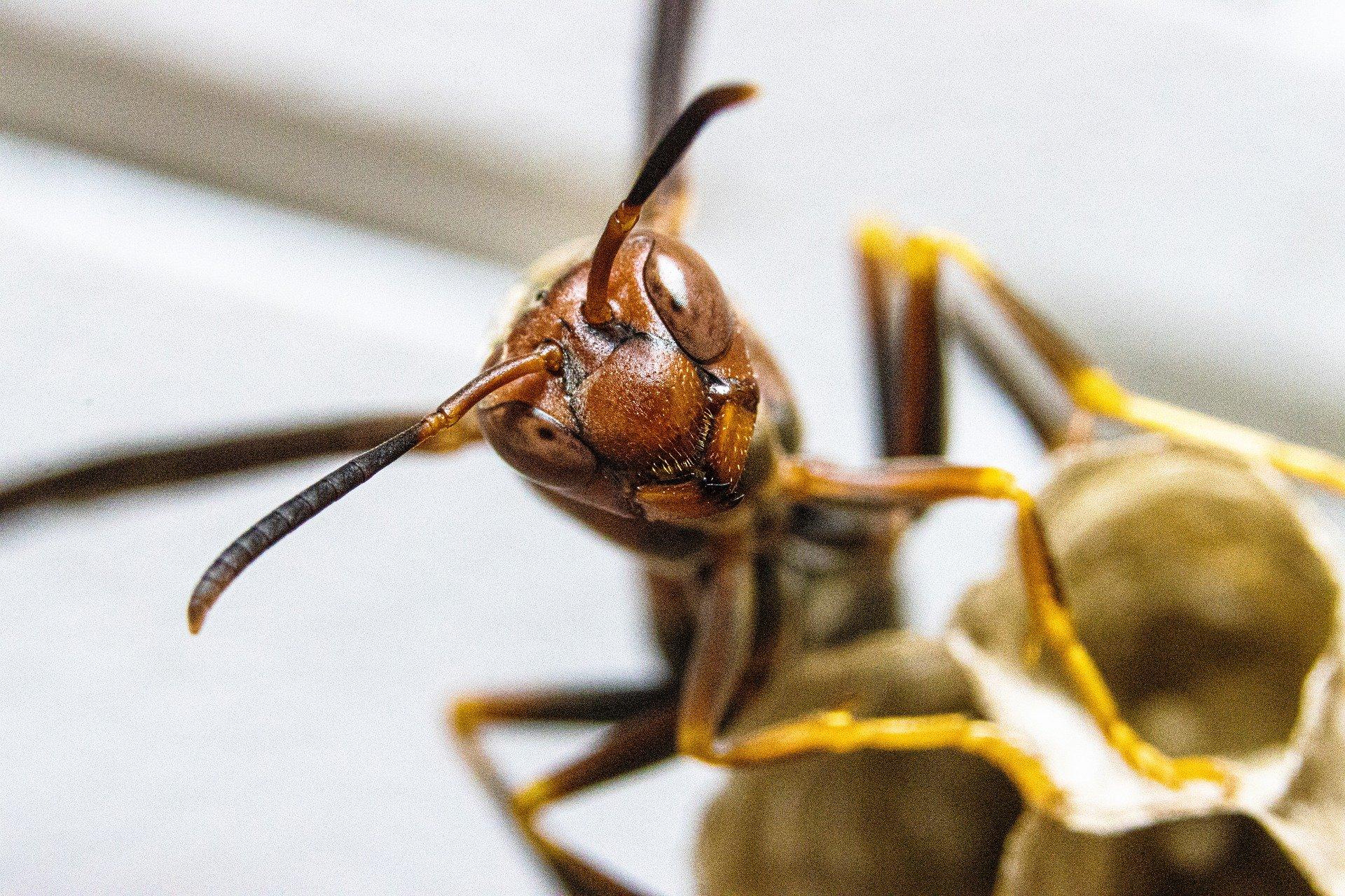 destruction nid de frelon chatenay malabry