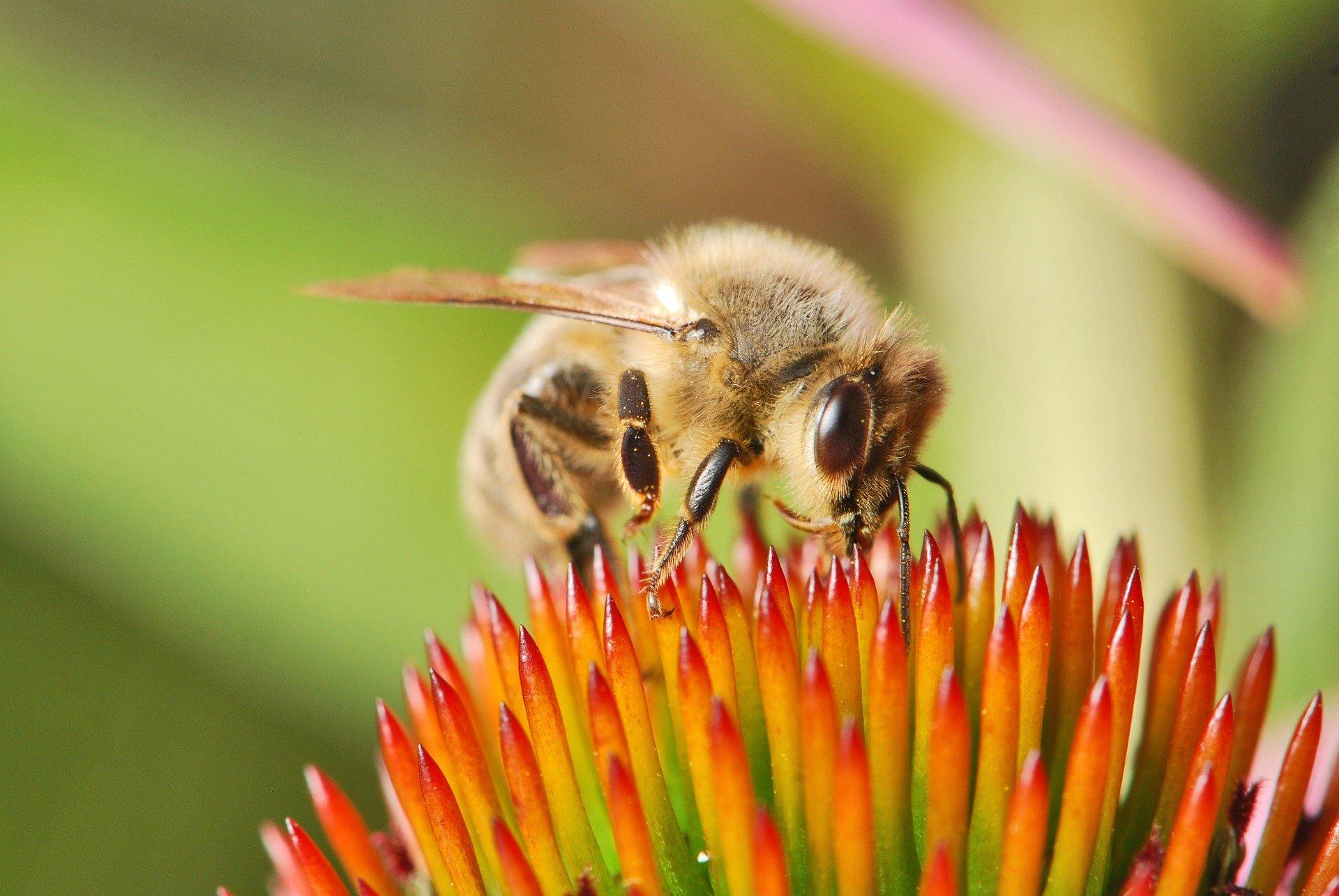 comment faire fuir les abeilles