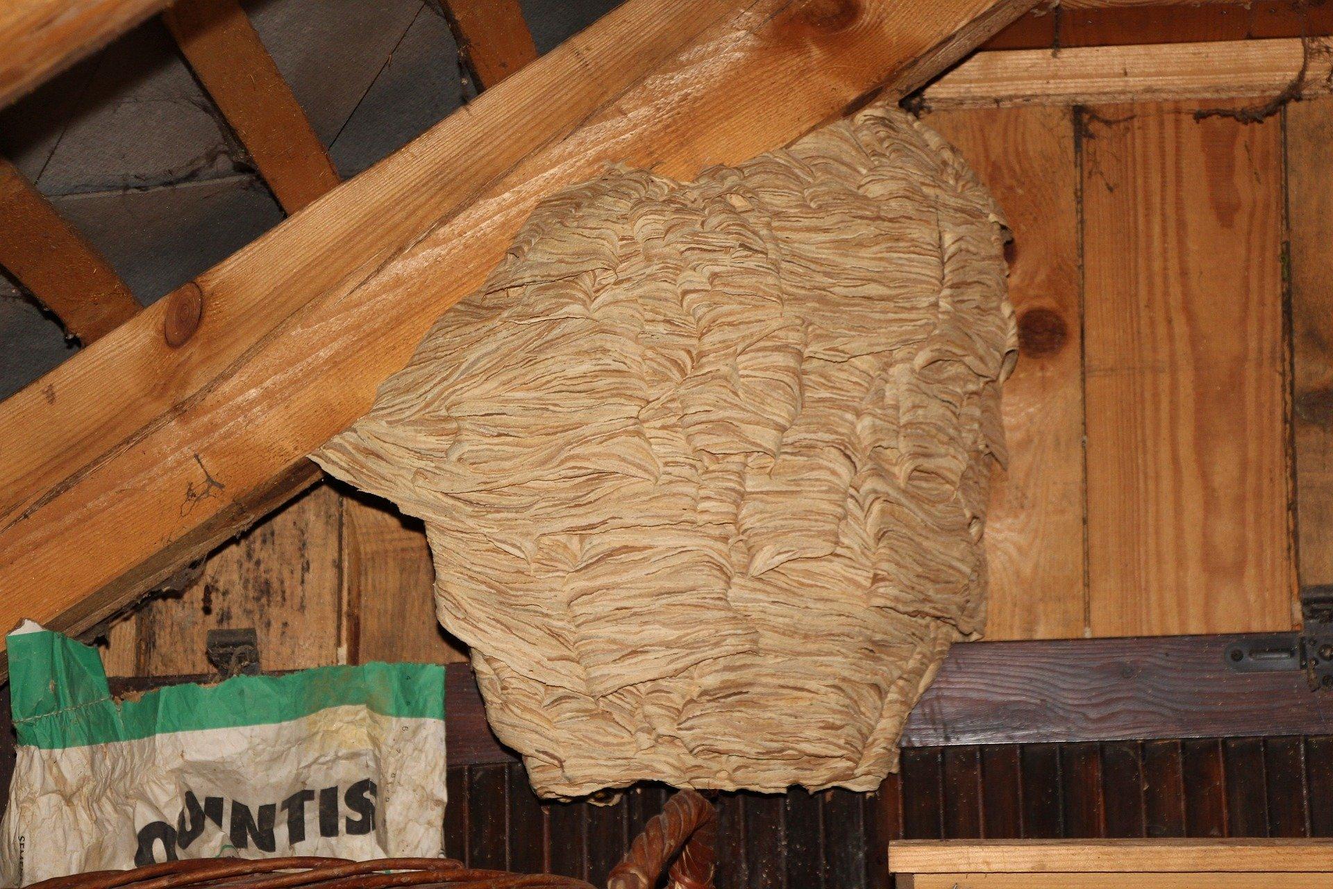détruire nid de frelons le pré saint gervais
