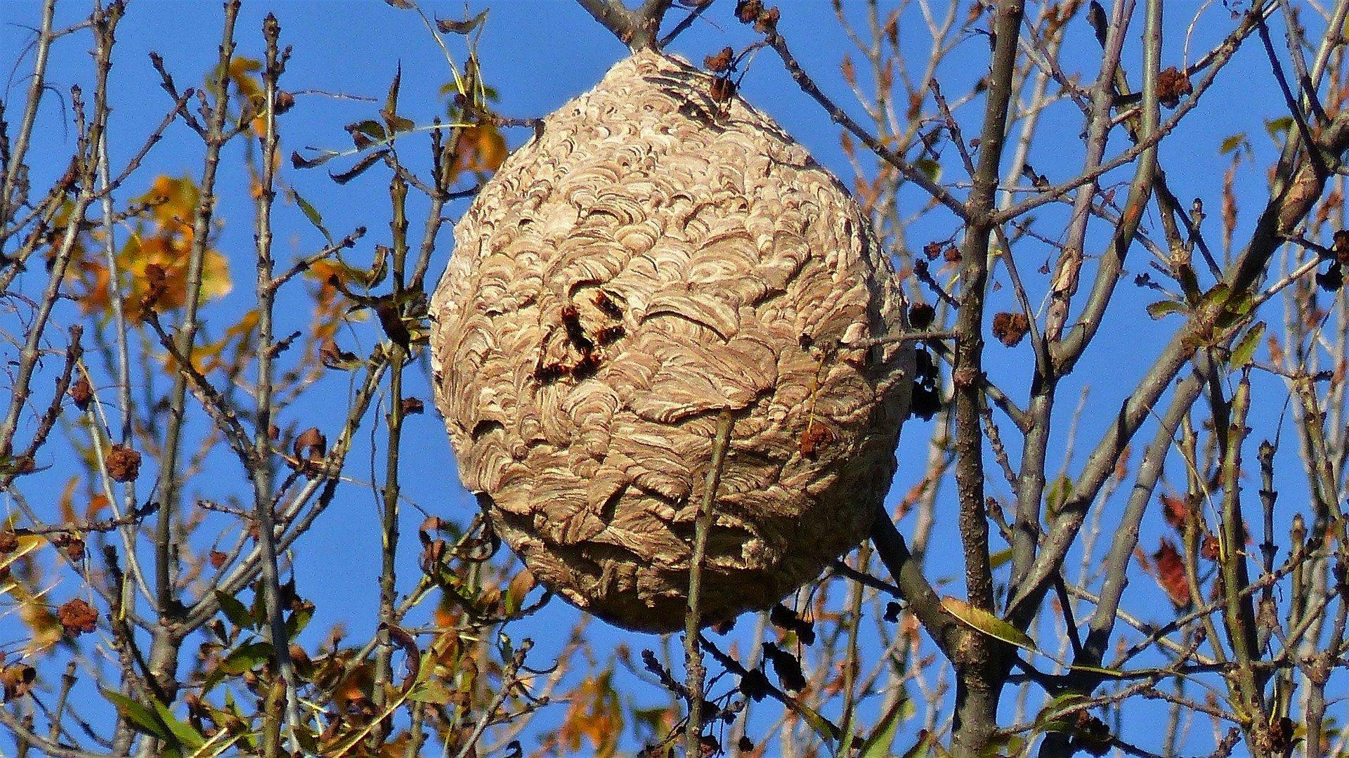 destruction eradication nid de frelon le pré saint gervais